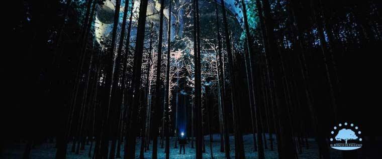 Bosco Elettrico – Tree of a perfect pair