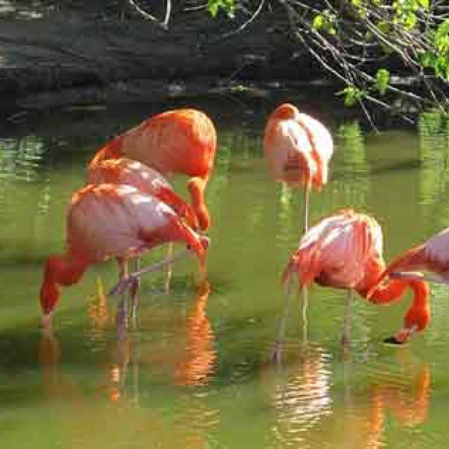 I laghi del Circeo si colorano di rosa