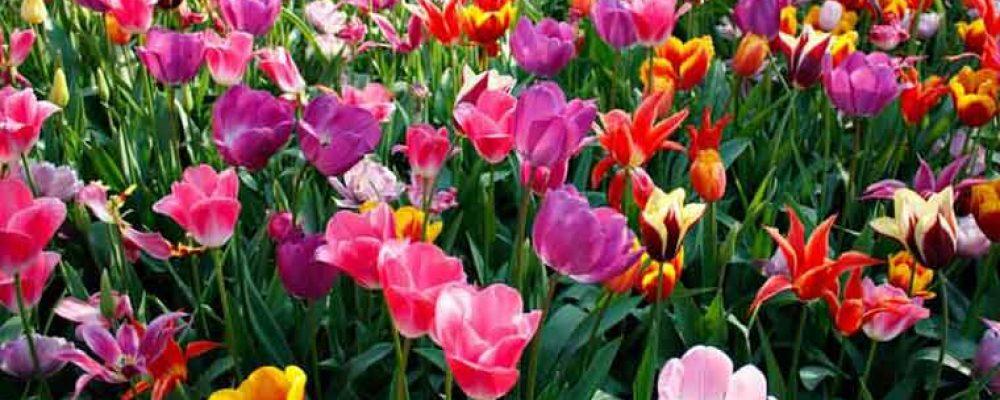 Primavera dentro e fuori