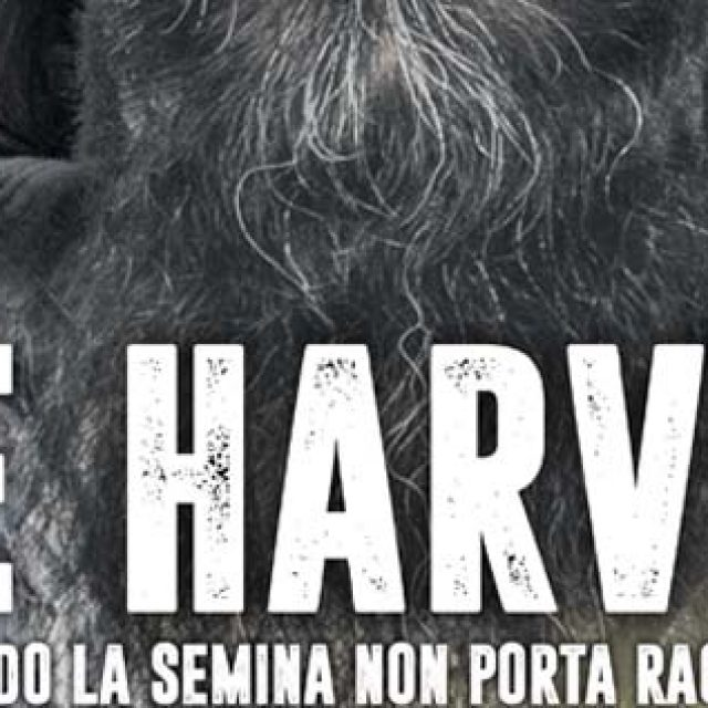 The Harvest: Agro Pontino sotto accusa