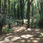Parco avventura il Bosco di Paliano
